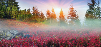 Free Alpine Autumn In Gorgany Royalty Free Stock Images - 47012389