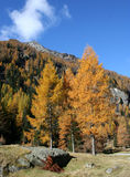 Alpine autumn landscape Royalty Free Stock Images