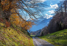 Alpine autumn landscape with road in mountains Royalty Free Stock Image