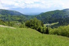 Alpine Berge und Wiesen Stockbild