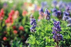 Alpine Blumen Stockbild