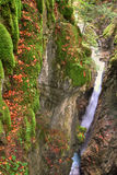 Alpine canyon in the beautiful autumn forest with Kessel Waterfall in Brandnertal valley, Voralberg, Austria, HDR Stock Photo