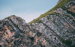 Alpine capricorn Steinbock Capra ibex on top of a steep mountain. Switzerland brienzer rothorn stock photos