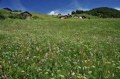 Alpine chalets in alpine meadows Royalty Free Stock Photos
