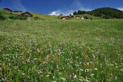 Alpine Chalets in den alpinen Wiesen Lizenzfreie Stockfotos