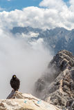 Alpine chough crow Royalty Free Stock Images