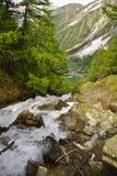 Alpine Creek sulla traccia al rifugio Sella, valle di Cogne Immagine Stock