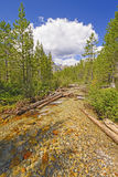 Alpine Creek on a Summer Day Stock Images