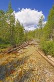 Alpine Creek un giorno di estate Immagini Stock