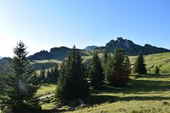 Alpine enviroment at the swiss alps. In summer stock photos