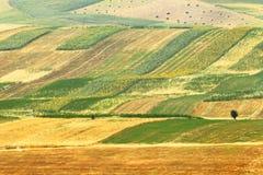 Alpine farm field. Kyrgyzstan stock photo