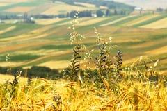 Alpine farm field. Kyrgyzstan stock photos