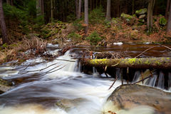 Alpine fast river in forest Stock Images