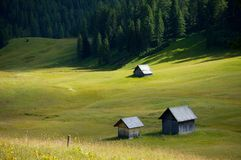 Alpine Field Stock Images