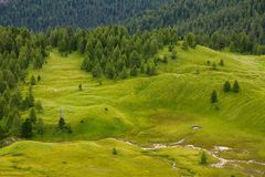 Alpine field Stock Image