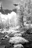 Alpine field in infrared black and white. Infrared black and white moss covered stones in alpine field with surrounding forest against cloudy skies Royalty Free Stock Photography