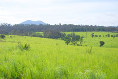 Alpine field. At thungsalangluang national park, pitsanulok province Stock Image