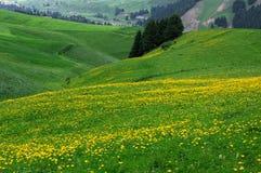 Alpine flowers. In Wutanggou China Stock Photo