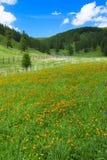 Alpine flowers. Spring time, mountains Stock Photo