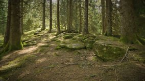 Alpine forest Stock Photography