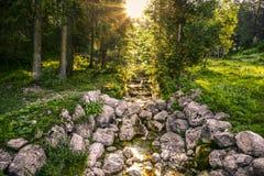 Alpine forest creek Stock Photography