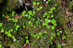 Alpine forest floor topview. Topview shot of an alpine forest floor in spring. Vegetation in a high altitude area (Bavarian Alps, Germany&#x29 Royalty Free Stock Photo