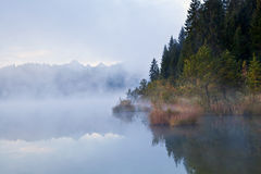 Alpine forest in fog Royalty Free Stock Photography