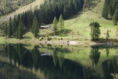 Alpine forest and lake. Scenic view of green Alpine forest reflected in lake, Salzkammergut  Austria Stock Image