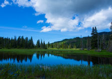 Alpine forest and lake royalty free stock images