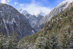 Alpine forest landscape Royalty Free Stock Photo