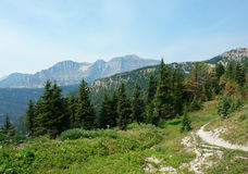 Alpine forest and meadow Stock Images