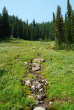 Alpine forest and meadow Royalty Free Stock Photo