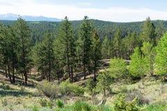 Alpine forest. Mountain landscape, Florissant, Colorado royalty free stock photo