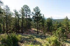 Alpine forest. Mountain landscape, Florissant, Colorado stock photography