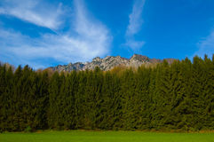 Alpine forest and mountains Royalty Free Stock Photos