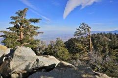 Alpine Forest near San Jacinto Peak, Palm Springs Royalty Free Stock Photos