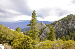 Alpine Forest near San Jacinto Peak, Palm Springs royalty free stock photos