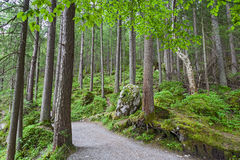Alpine forest on the shore of lake Eibsee. Germany. The road between the trees of the forest Stock Photos