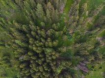 Alpine Forest from the sky stock images