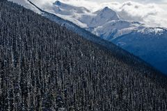 Alpine Forrest, Blackcomb Mountain Stock Photography