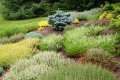 Alpine Garden. Heaths, heathers and evergreens in an alpine garden stock photography