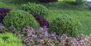Alpine garden with dwarf conifers close up.  Royalty Free Stock Photos
