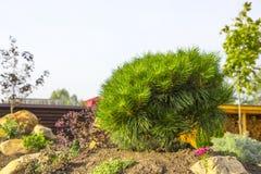 Alpine garden with dwarf conifers close up.  Stock Photo
