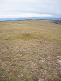 Alpine Grassland Stock Photo