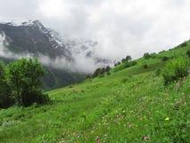 Alpine grassland. Alpine meadows in the Caucasus mountains. The Elbrus region Royalty Free Stock Photography
