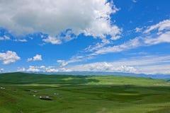Alpine grassland. The scenery of alpine grassland in Gannan, Gansu, China stock photo