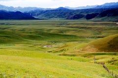 The Alpine Grassland scenery on the Qinghai Tibet Plateau Royalty Free Stock Photos