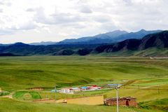 The Alpine Grassland scenery on the Qinghai Tibet Plateau Royalty Free Stock Photography