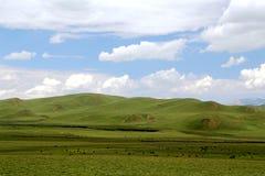 The Alpine Grassland scenery on the Qinghai Tibet Plateau Royalty Free Stock Image