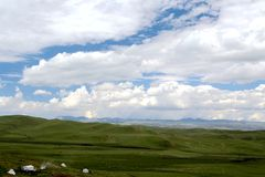 The Alpine Grassland scenery on the Qinghai Tibet Plateau Stock Images